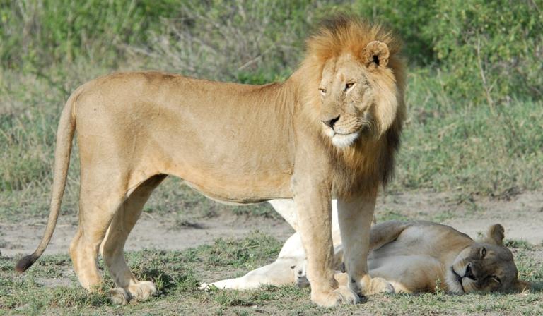 RT Lions
