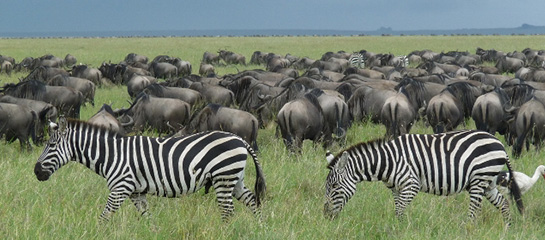 The-Serengeti-National-Park