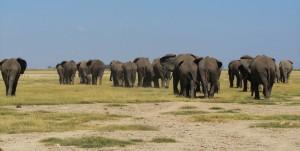 Elephants Amboseli - Malika Travel