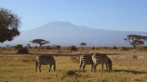 Zebra's Amboseli - Malika Travel