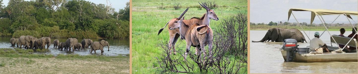 Selous Game Reserve Wildness Safari Tanzania