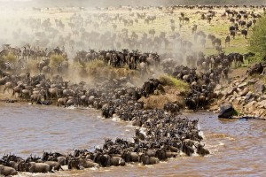 Migration Kenia - Malika Travel