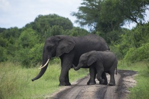 Queen Elizabeth National Park Malika Travel