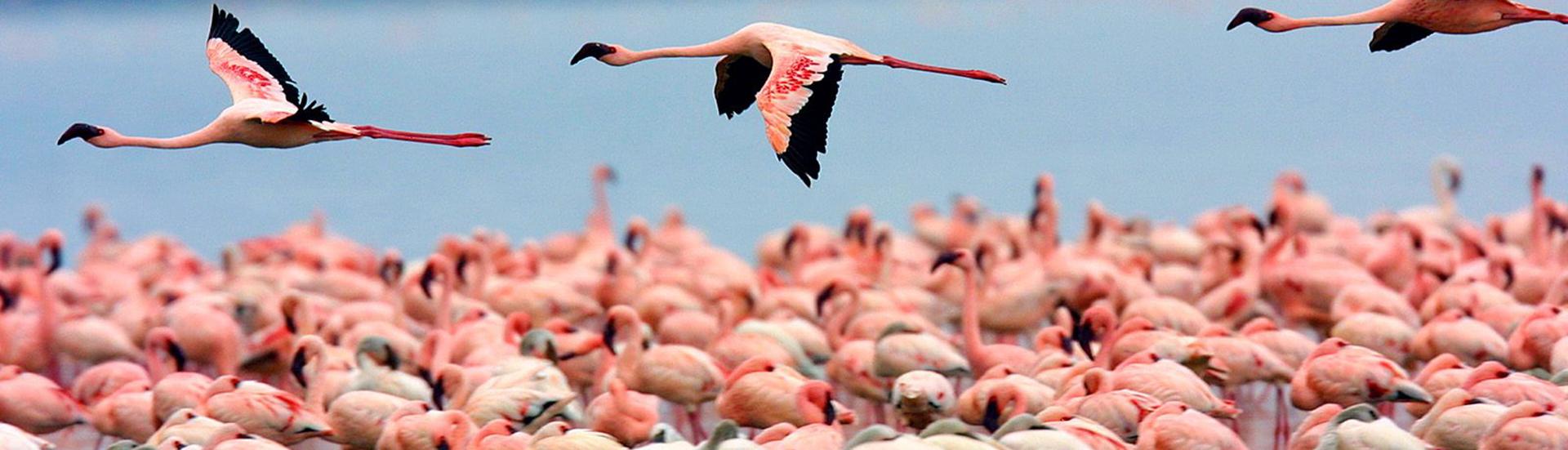 Lake-Nakuru-National-Park